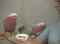 San Diego Zoo birds